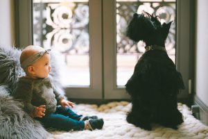 Preparing Your Dog for The Arrival of Your New Baby