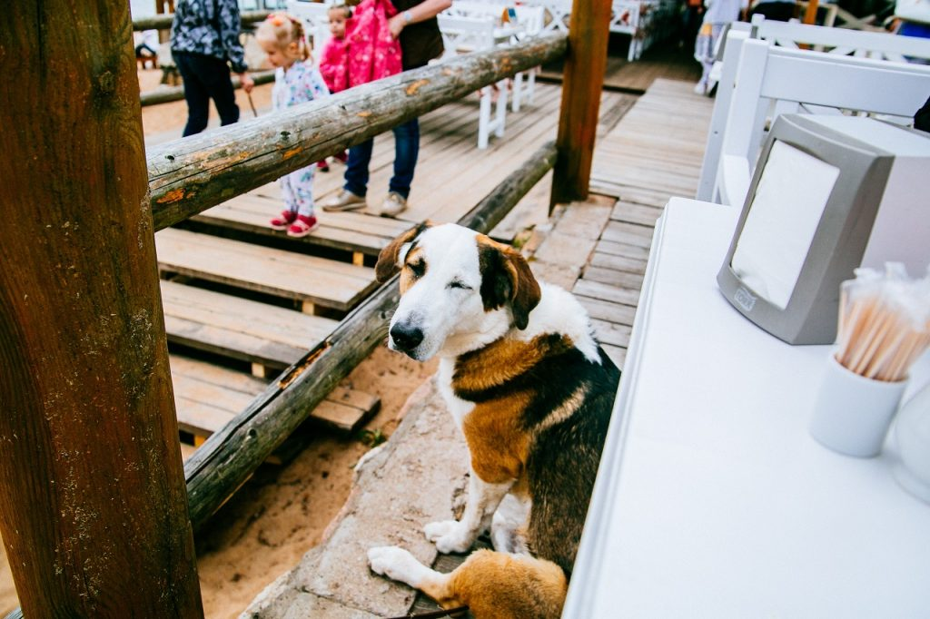 Cape Town Restaurant Gives Dogs Their Own Menu