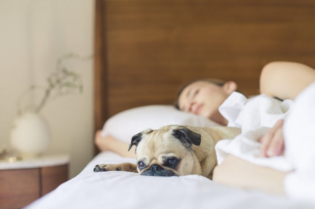 Science: It's Better To Sleep Next To A Dog Than A Man