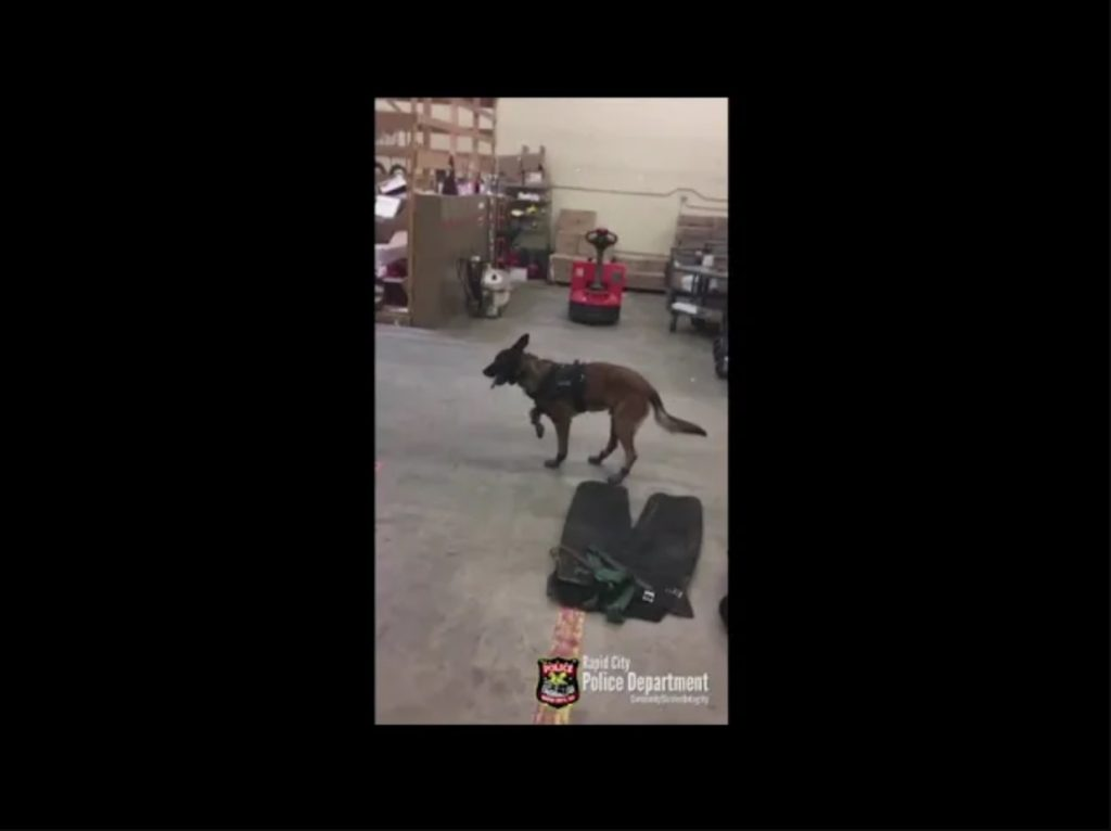 Police Dog's First Time Wearing Winter Boots