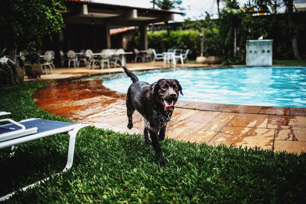 Tips To Protect Your Pets From The Heat