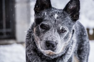 8 Reasons To Adopt An Older Dog Instead Of A Puppy