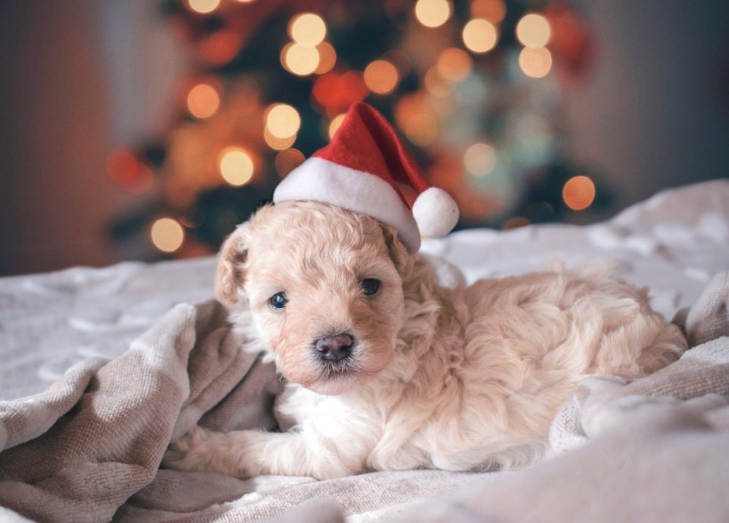 You Got The Kids A Pup For Christmas. What Now?