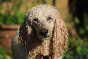 Does Your Dog Have A Healthy Coat And Skin?