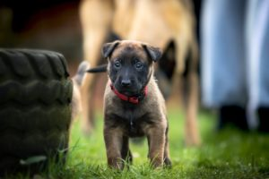 Socialising Your Puppy For Good Behaviour