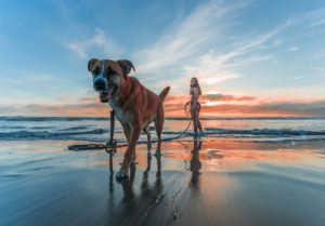 5 Tips For Safe, Stress-Free Pet Travel