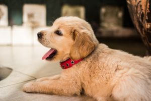 Get The Key To Raising And Training Your New Puppy