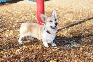 Dog Park — 11 Dos And Don'ts