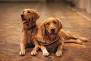 Health Issues And Conditions In Specific Dog Breeds