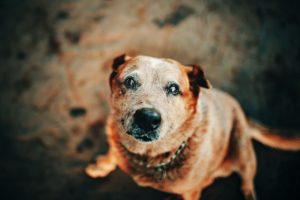 How To Help Your Old Dog Age Gracefully