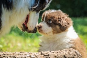 Why Puppy School Is Crucial